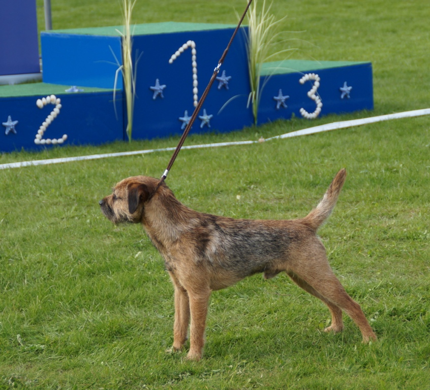 Baltic Terrier Show 2013 (1)